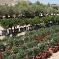 Mittelmeer-Pflanze